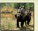Wildlife India Tour Packages